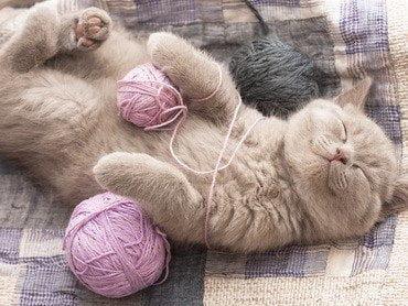 pisica se joaca cu chemul roz