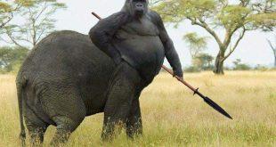 elefant gorila