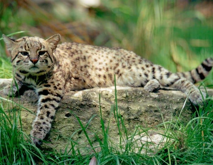 Cea mai ucigatoare pisica