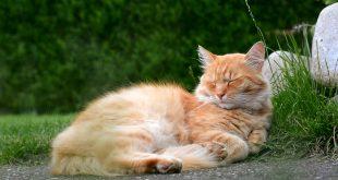 corpul pisicii