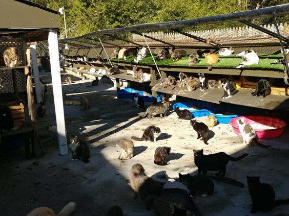 Casa pentru 300 de pisici