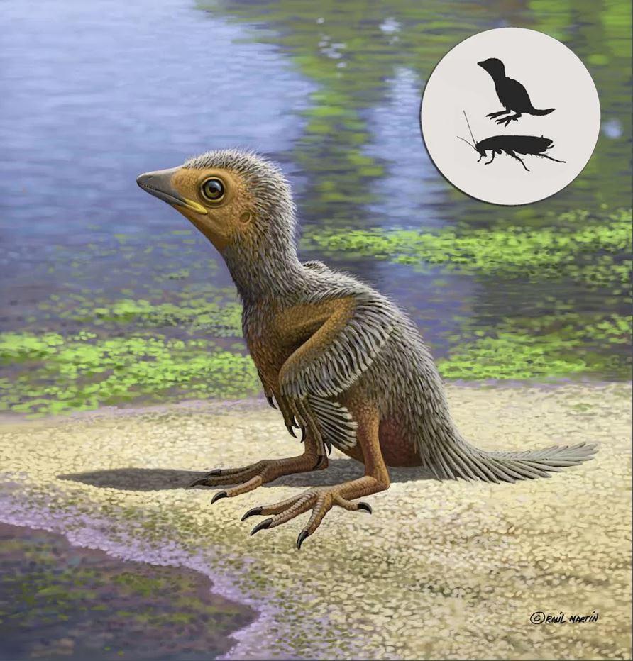 Cea mai mica pasare de pe vremea dinozaurilor