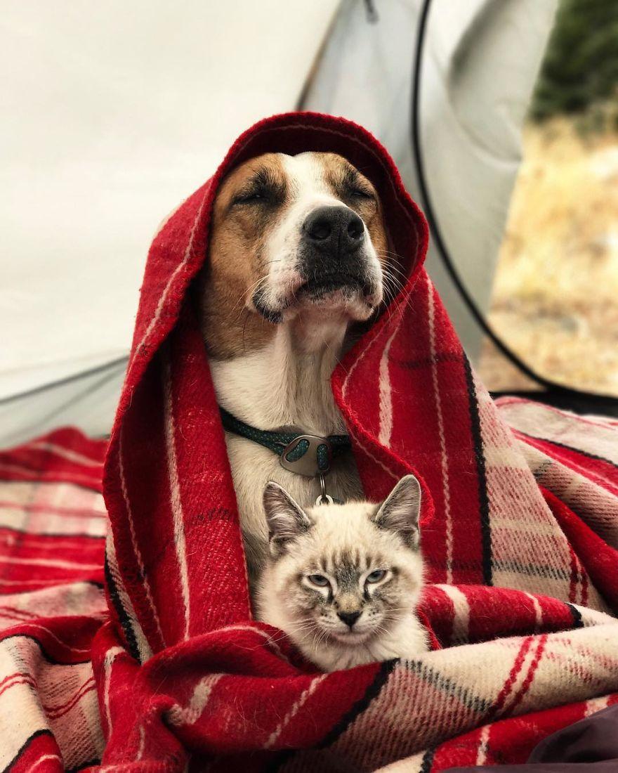 Cu cainele si pisica in excursie