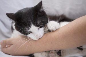 Pisici agresive tratament
