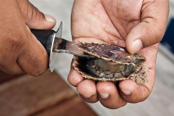 Tipuri de scoici – Comestibile – Scoici de perle