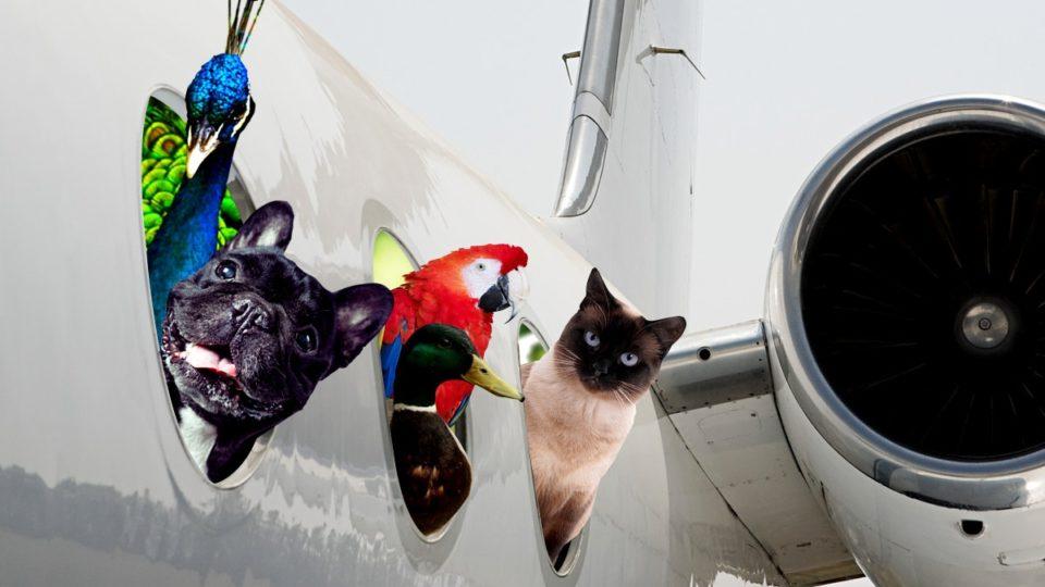 animale de companie cu avionul