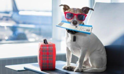 Transport animale cu avionul – Ghid complet