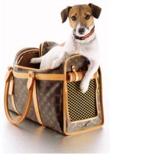 caine in geanta