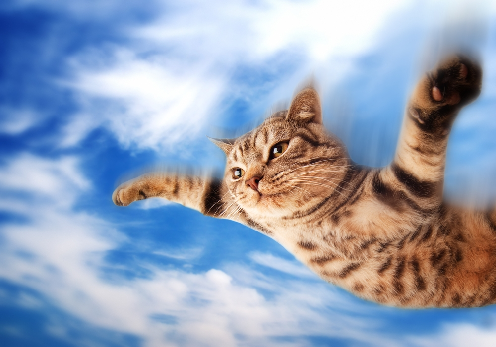 pisica zburatoare