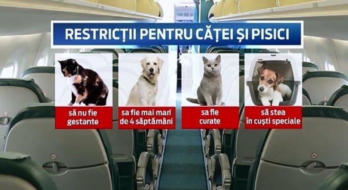 restrictii pentru caini si pisici in avion