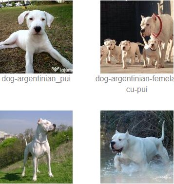 Poze Dog Argentinian