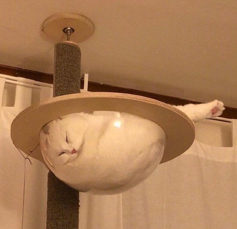Pisica la ceaun