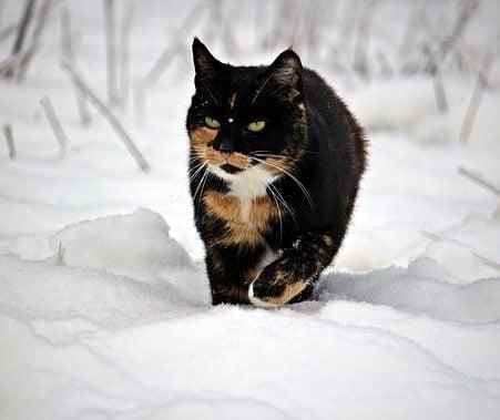 Cum au grija rusii de pisici