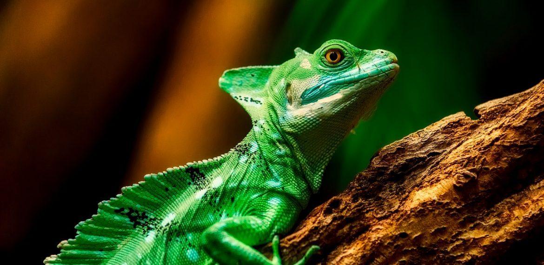 Curiozitati despre reptile