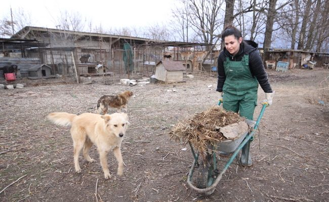 O studenta din SUA munceste voluntar intr-un adapost de caini din Romania