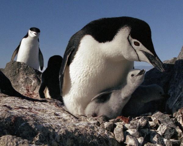 Nume de pinguini