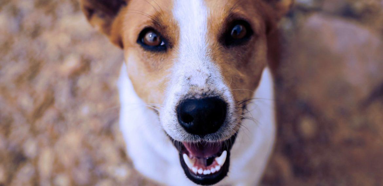 Terapia cu animale – numeroase beneficii pentru sănătate