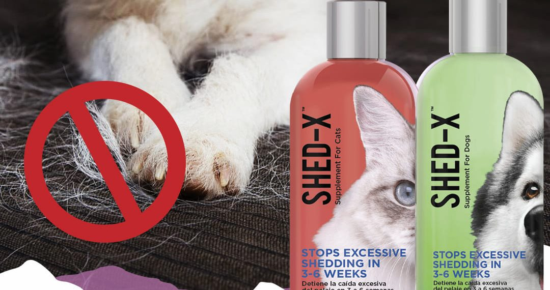 Supliment nutritiv impotriva naparlirii excesive la caini si pisici, SHED-X