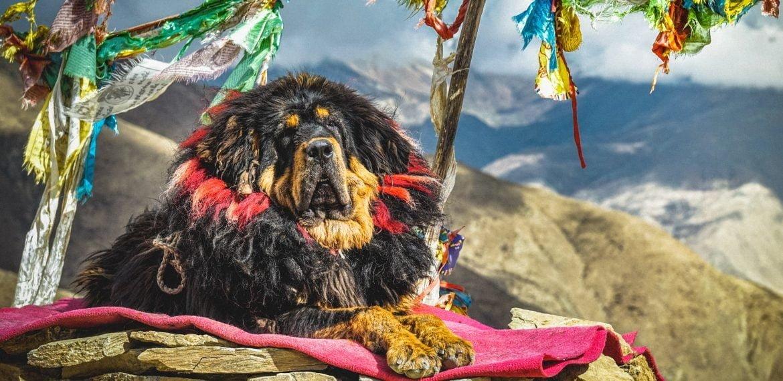 5 rase de câini mai puțin întâlnite